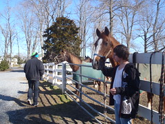 Giving carrots and apples to the horses for a job well done