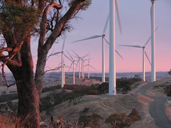 20120214_20 Waterloo (Bush Philosopher - Dave Clarke) Tags: tree gum energy engineering australia eucalypt electricity southaustralia turbine sustainable renewableenergy midnorth sustainableenergy waterloowindfarm windispower