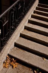 meritocracia (manu_perez_73) Tags: madrid espaa nikond50 escaleras hojassecas manuperez meritocracia nikkor18105mm manuperez73 manuperezphotogmailcom