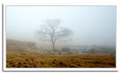 foggy view (seve) Tags: desktop trees wallpaper england mist english apple nature weather fog photoshop canon landscape 350d aperture scenery rocks walks flickr imac background wildlife osx steve foggy elements cumbria views canon350d macosx gregory 169 ios fell hikes topaz knott iphone aonb appleaperture farleton 240mm appleimac stevegregory borderfx ringexcellence applecrypt httpwwwflickrcomphotosapplecrypt httpapplecryptblogspotcom httpapplecrypttumblrcom