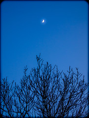 Crescent moon in a blue night sky. . . (CWhatPhotos) Tags: crescent moon evening light dusk olympus penn elp1 1442mm kit esystem four thirds digital camera cwhatphotos mzuiko zuiko lens pictures picture photo photos image images foto fotos that have which contain taken epl1 black silhouette silhouetted blue sky skies tree trees county durham time north east flickr