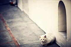 quiet times. (kvdl) Tags: italy cat quiet positano tomcat quiettimes kvdl