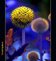 flowers from mars - the bee is from venus (PhotoArt Images) Tags: flower explore photoartimages