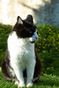 The King of Castle I (Ricsilva76) Tags: blackandwhite castle animal cat blackcat gato castelo felino whitecat gatopreto gatobranco