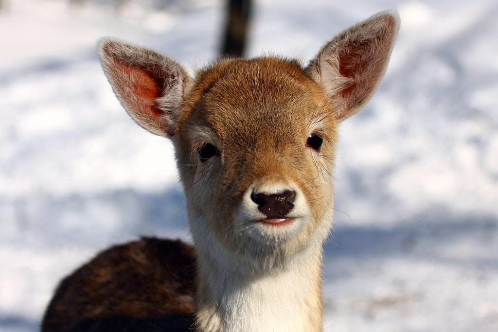 Soooooo Cute! by Martin Cathrae, on Flickr