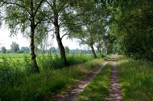 Gifhorn Kranichsmoorsee 110616 033-2.jpg