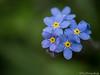 Blau &  Gelb 26.04.2012