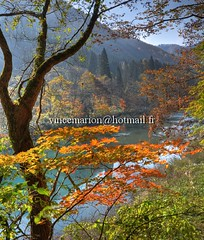 Dakigaeri001 (vincemarion) Tags: red fall nature japan automne river landscape rouge maple autumnleaves momiji paysage japon feuille koyo erable dakigaerivalley couleurautomnale
