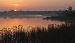 Dans les roseurs de l'aube 23/3/12 (jmsatto) Tags: loveit aube essonne étangsdesaclay