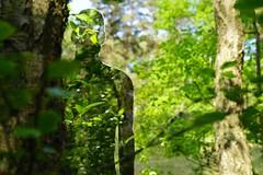 Rob Mulholland  Beyond the Forest  Lens: Sony FE 50mm 1.8 (franz-wegener.de) Tags: art zingst 2016 robmulholland beyondtheforest sonya7 sonyfe50mmf18