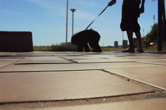 Urso na Beira Mar (Possidonio) Tags: friend saudade best cachorro passeio urso malts