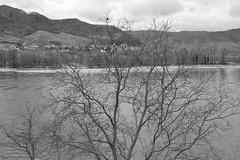 Drnstein/Austria ( Philipp Hamedl) Tags: bw austria sterreich spring apricot sw danube niedersterreich wachau austrian wein frhling donau vinyards loweraustria heurigen weinbau drnstein marille sterreichisch obstbau