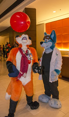 _DSC4257 (Acrufox) Tags: midwest furfest 2015 furry convention december hyatt regency ohare rosemont chicago illinois acrufox fursuit fursuiting mff2015