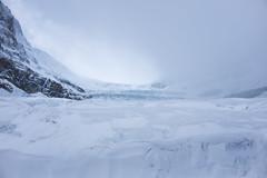 Columbia Ice Field Glacier (flippers) Tags: ca mountain snow canada cold jasper glacier snowcapped alberta icefields columbiaicefields snowcap