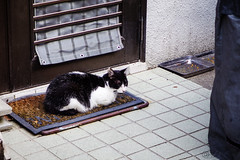 Today's Cat@2016-06-04 (masatsu) Tags: cat pentax catspotting mx1 thebiggestgroupwithonlycats