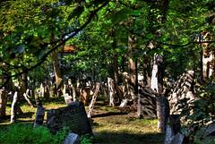 Repubblica Ceca, Praga, cimitero ebraico (forastico) Tags: praga tombe cimitero d60 ebrei repubblicaceca lapidi cimiteroebraico forastico nikonflickraward luckyorgood