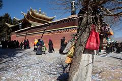Tibetan new year,Aba,Sichuan (woOoly) Tags: china chinese tibet amdo aba tibetan  sichuan  zhongguo kirti tibetculture tibetanbuddhist gelugpa monlam tibetannewyear   tibetanculture monlamfestival   gelupa tibetnewyear  gerdeng tibetarea abacounty northofsichuan  gerdengmonastery monasterykirti templekirti amdotibetregion yellowsect