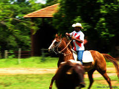 A Man and a Horse... (Raul Val) Tags: horse man men animals cavalo raulval
