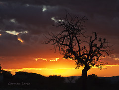 Momento mgico... (Carmen Lario) Tags: light sunset sky sun tree luz sol clouds murcia cielo nubes rbol puestadesol lorca almendro almondtree carmenlario