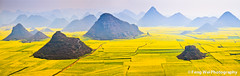 Field of Gold (Feng Wei Photography) Tags: china travel light sunset sky panorama cloud inspiration flower color colour tourism nature floral beautiful beauty yellow horizontal rural season relax landscape golden march countryside spring amazing scenery colorful asia paradise peace view outdoor vibrant horizon rustic relaxing scenic vivid peaceful panoramic serenity vista serene agriculture yunnan inspire breathtaking magnificent rapeseed luoping rapeseedflower gettyimageschinaq3