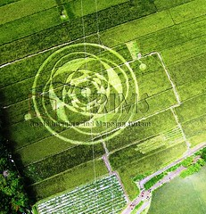 foto crop circle di Sawah (caturariesokhmana) Tags: circle crop di padi sawah