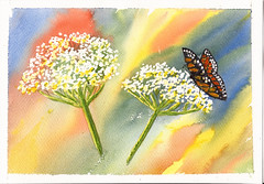 cowparsley.. (carlene byland) Tags: flower colour art butterfly painting cowparsley