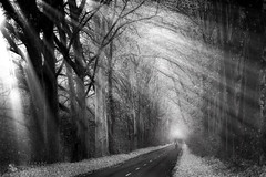 winner takes it all (ildikoneer) Tags: road bw nature monochrome leaves bicycle race landscape hungary shine path rays tress sunbeams