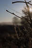 Spring frost (Skink74) Tags: uk morning england 20d ice water frost crystals bokeh hampshire canoneos20d twig buds newforest woottonbridge nikkor35f14 nikkor35mm114ai