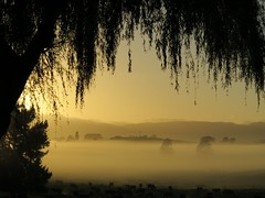 Tree framed fog (kiwinz) Tags: tree fog dawn earlymorning waikato canong1x