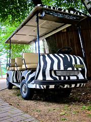 pimp my ride (Mycophagia) Tags: golf zebra golfcart zebrastripes stripepattern