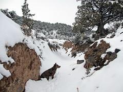Biff Planning His Exit (Bob Palin) Tags: winter 15fav usa dog snow animal utah waynecounty instantfave nopin orig:file=20120214elph310hs06561000