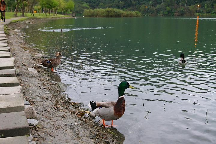宜蘭冬山鄉梅花湖0031