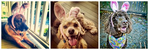 "Easter Bunny Dogs 4.8.12 • <a style=""font-size:0.8em;"" href=""http://www.flickr.com/photos//6912981308/"" target=""_blank"">View on Flickr</a>"