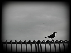 20120220 Perched