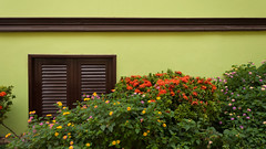 Green Wall (wenzday01) Tags: travel flowers wallpaper brown green wall stairs ecuador nikon colorful paint widescreen steps flowerbed railing santaana nikkor 169 peas guayaquil guayas d90 thesteps santaanahill nikond90 18105mmf3556gedafsvrdx