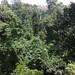 Kakum national park