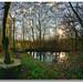 Pond stanley marsh