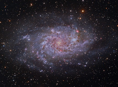 M33 (NGC 598) The Triangulum Galaxy in LRGB+HA (Terry Hancock www.downunderobservatory.com) Tags: camera sky color monochrome field wheel night stars spiral photography mono pier backyard fotografie williams photos thomas space shed science images off astro bach observatory telescope ngc598 filter galaxy m33 terry astronomy imaging triangulum pinwheel hancock messier ccd universe cosmos axis paramount luminance optics tmb osc teleskop astronomie byo deepsky guider starlightxpress flattener Astrometrydotnet:status=solved qhy5 130ss Astrometrydotnet:version=14400 at2ff mks4000 qhy9m gt110s wwwdownunderobservatorycom wo68mm Astrometrydotnet:id=alpha20120354988041