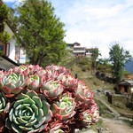 "Plant in Ghandruk <a style=""margin-left:10px; font-size:0.8em;"" href=""http://www.flickr.com/photos/14315427@N00/6992639367/"" target=""_blank"">@flickr</a>"