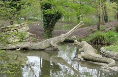 Teleosaurus (Tiggrx) Tags: sculpture lake london model dinosaur reptile prehistoric crystalpalacepark benjaminwaterhousehawkins teleosaurus teleosaur