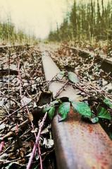 Rusty Perspective (Celine181) Tags: green abandoned train nikon rust belgium decay perspective tracks oxidation depot softfocus exploration rouille oxydation abandonné végétation d90 flouartistique sncb monceausursambre railles rustandgreen depotdetrain