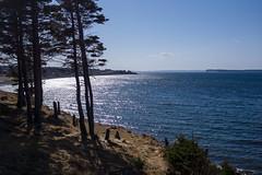 Topsail Beach Shoreline (Tk_White) Tags: ocean trees sea sky beach nature zeiss newfoundland landscape sony 7 carl 24mm 18 seashore topsail nex