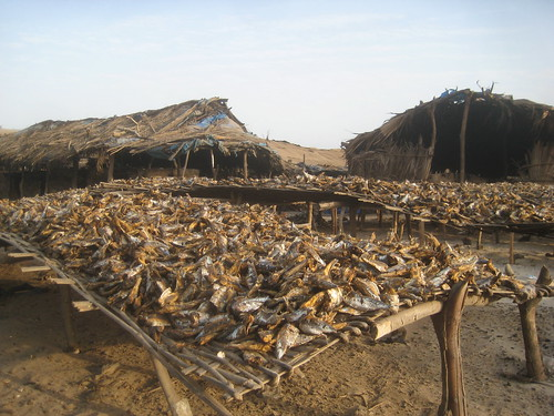 Dry fish in Kafountine