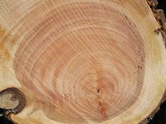 Wood upisf_4630278291_l