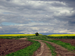 After the storm (Dimitar Balyamski) Tags: storm nature landscape spring bulgaria