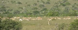 South Africa Hunting Safari - Eastern Cape 30