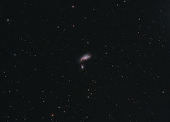 NGC4490 The Cocoon galaxy (ShoulderOps) Tags: light spiral eos space deep astro telescope filter galaxy nebula pollution canes goto pro modified astronomy galaxies phd reflector cocoon collision cls peculiar guiding cs3 arps skywatcher 200p ngc4490 venatici pixinsight 1100d ngc4485 arp269 astronomik qhy5 neq6 shoulderops