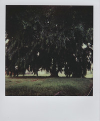 Instant green (shuzhens) Tags: trees green film project polaroid singapore neighborhood 600 instant impossible onestep