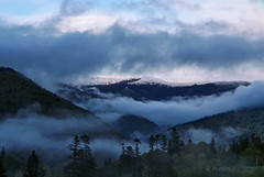 Carpathian Mountains /  (R_Ivanova) Tags: light sky mist mountain snow tree nature colors clouds landscape spring hill romania sinaia    karpati fujifilmfinepix karpaty      rivanova