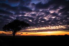Cloudy sun set (clemmat) Tags: blue sunset tree night clouds landscape cloudy nuages paysage arbre bluelight nuageux charentemaritime saintchristophe 70d tamron1750 tamron1750f28 tamron1750mmf28 canoneos70d aigrefeuilledaunis